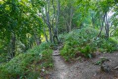 Путь в одичалых древесинах Стоковое фото RF