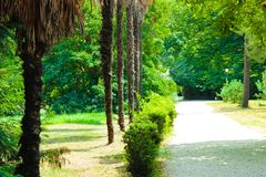 Путь в парке на юге стоковое изображение rf