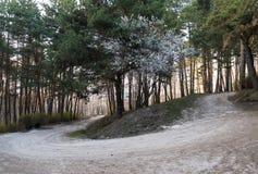 Путь в парке среди деревьев стоковая фотография rf