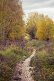 Путь в парке Стоковое фото RF
