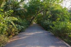 Путь в парке Стоковое Изображение RF