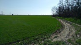 Путь в поле Стоковые Фотографии RF