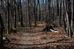 Путь в последней зиме стоковое изображение