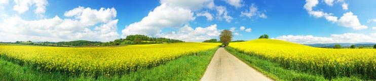 Путь в поле рапса Стоковые Изображения