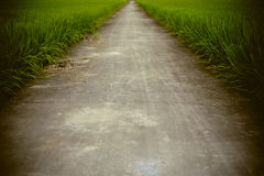 Путь в поле риса фермы Стоковые Фото