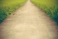 Путь в поле риса фермы Стоковое Изображение RF