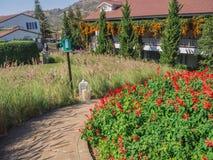 Путь в поле цветка и зеленом дереве Стоковая Фотография