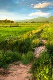Путь в поле Стоковое фото RF