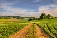 Путь в полях Стоковые Фото