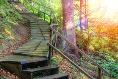 Путь в прикарпатском запасе леса Стоковая Фотография