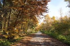 Путь в пуще осени стоковое изображение rf
