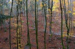 Путь в пуще с листьями осени Стоковое Изображение RF