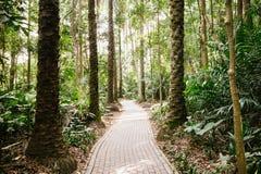 Путь в древесинах Стоковые Изображения