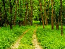 Путь в древесинах Стоковое фото RF