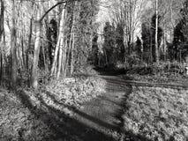 Путь в древесинах Стоковое Фото