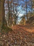 Путь в древесинах Стоковая Фотография RF