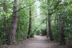 Путь в древесинах стоковые изображения rf