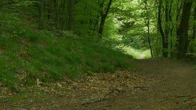 Путь в древесинах сток-видео