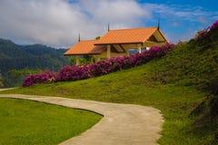 Путь в саде Стоковая Фотография