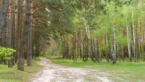 Путь в светлом лесе Стоковая Фотография