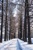 Путь в снеге Стоковое Изображение RF