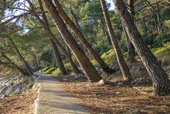 Путь в сосновом лесе стоковые фотографии rf