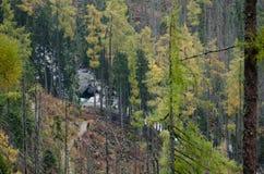 Путь в сосновом лесе к маленькому реке в горах стоковые изображения rf
