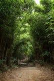 Путь в сочном бамбуковом лесе в Гонконге Стоковое Изображение