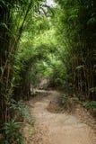 Путь в сочном бамбуковом лесе в Гонконге Стоковые Фотографии RF