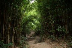 Путь в сочном бамбуковом лесе в Гонконге Стоковое Фото