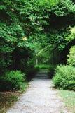 Путь в сочный зеленый лес в лете стоковая фотография