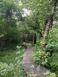 Путь в траве и лесе Стоковые Фото