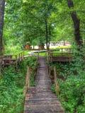 Путь в траве и лес в HDR Стоковое Изображение RF