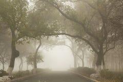 Путь в тумане Стоковое Изображение
