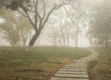 Путь в тумане Стоковая Фотография RF