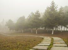 Путь в тумане Стоковые Фото