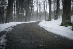 Путь в туманном лесе Стоковое Фото