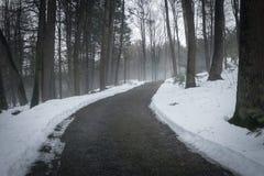 Путь в туманном лесе Стоковые Фотографии RF