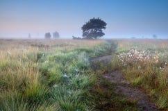 Путь в туманном утре лета стоковая фотография rf