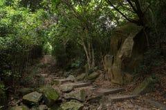Путь в тусклом лесе в Гонконге Стоковое фото RF
