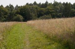 Путь в Bieszczady Стоковые Фотографии RF