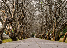 Путь в branchs деревьев Стоковое Изображение