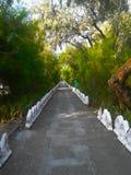 Путь в coniferous парке Стоковые Фотографии RF