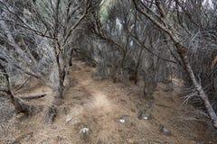 Путь глубоко в высушенный - вне лес Стоковое фото RF