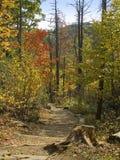 путь горы Стоковое Изображение RF