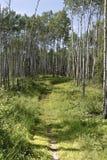 путь горы everest Стоковая Фотография RF