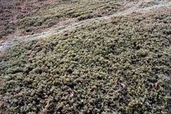 Путь гор Стоковые Фотографии RF