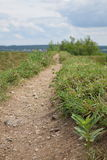 Путь грязи травы Стоковое фото RF