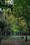 Путь грязи через деревья Стоковая Фотография RF