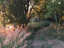 Путь грязи Стоковое фото RF